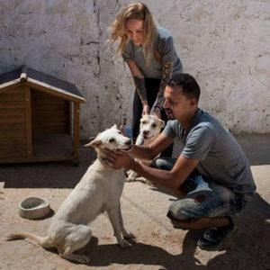Das Leid der Tiere in Tunesien