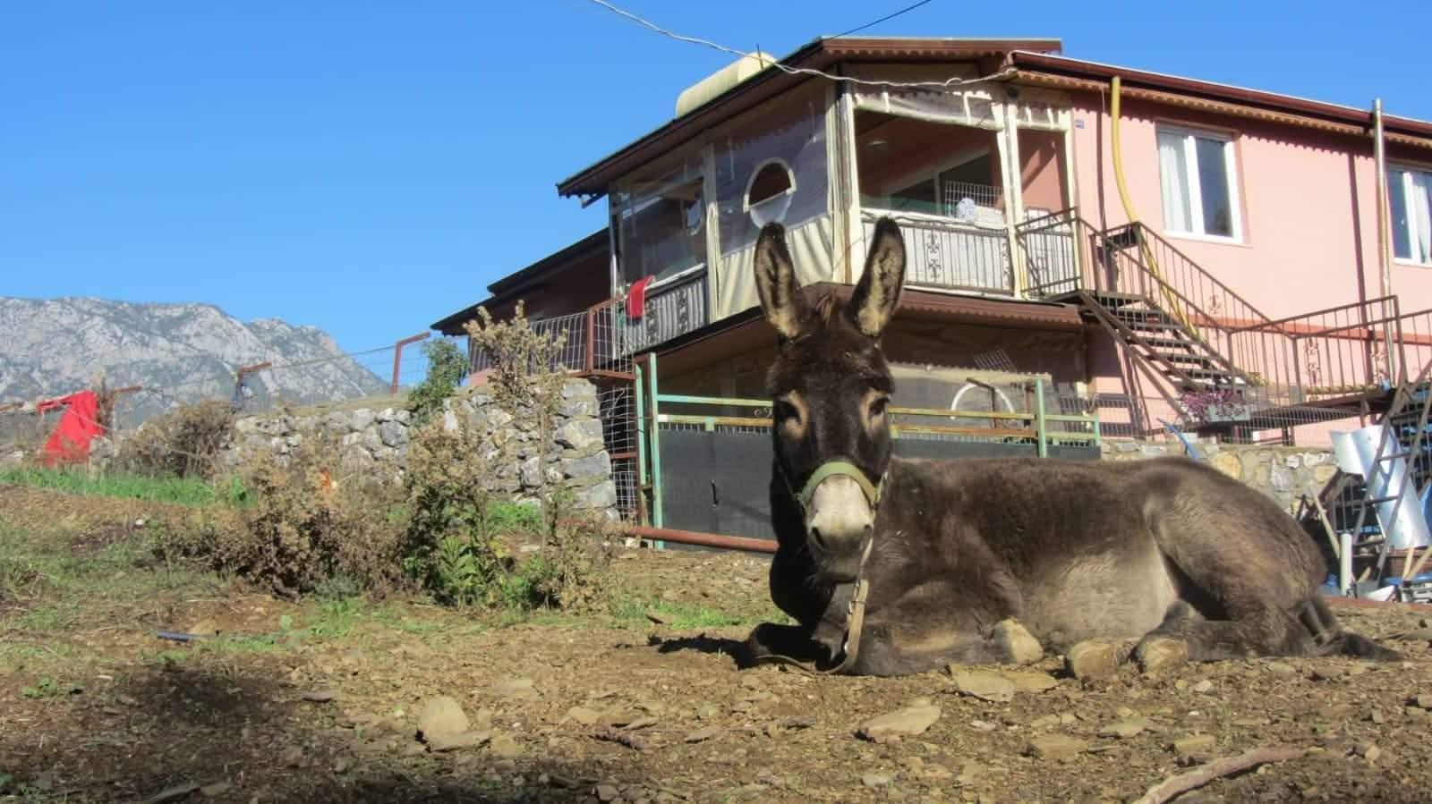 Ein Esel liegt vor einem Haus
