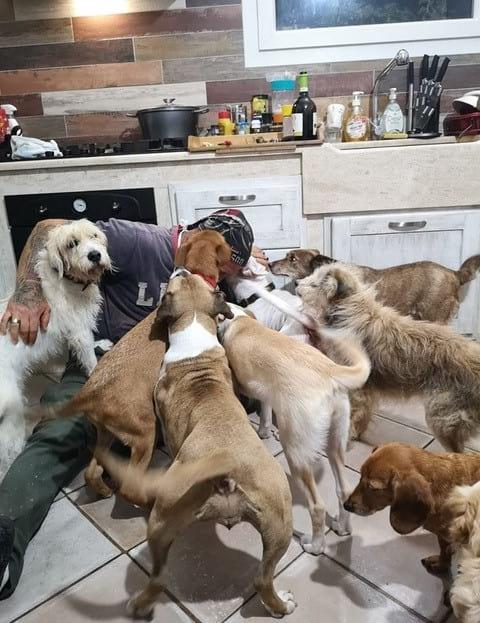 Eine Gruppe Hunde stürzt sich freudig auf ihr Herrchen