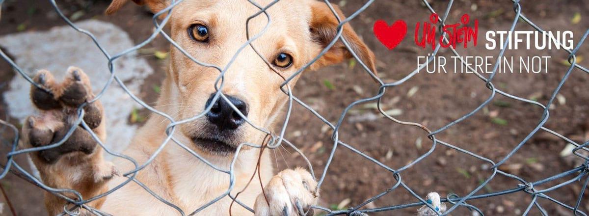 Ein Hund hinter einem Maschendrahtzaun. Oben Rechts in der Ecke das Logo der Uli Stein-Stiftung für Tiere in Not