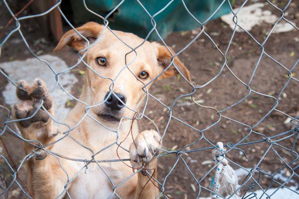 Ein Hund hinter einem Maschendrahtzaun