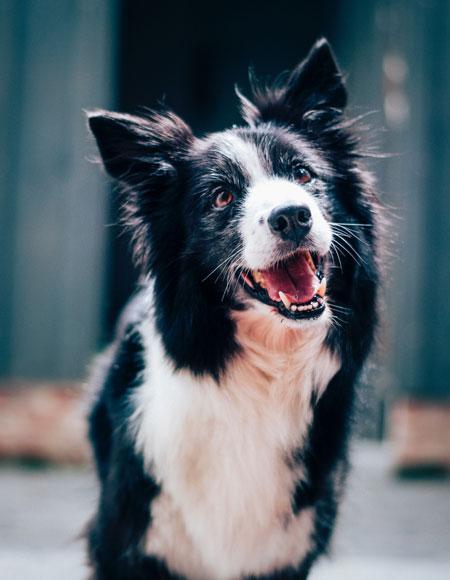 Ein Hund vor unscharfem Hintergrund