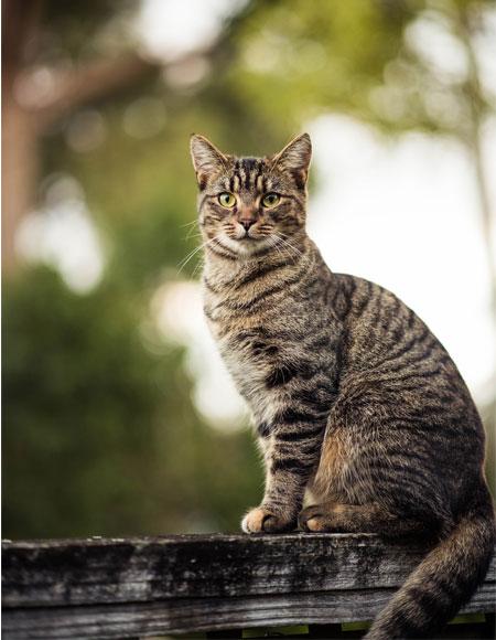 Eine Katze sitzt auf einem Zaun