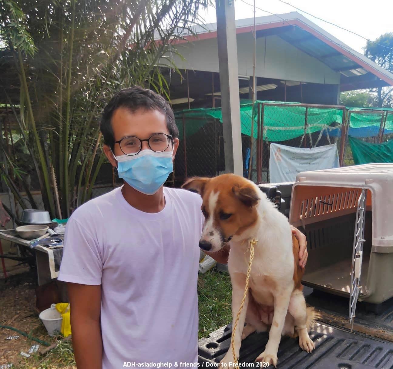 Straßenhunde in Asien – ein schlimmes Schicksal